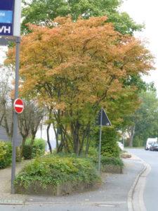 Neuer Standort für eine barrierefreie Bushaltestelle vor dem Rathaus in der Bergamtstraße